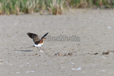 animale uccello marrone selvaggio becco in