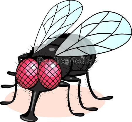 illustrazione di fly