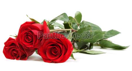 fiore picciuolo picciolo gambo passione zelo