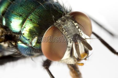 casa mosca estremo close up