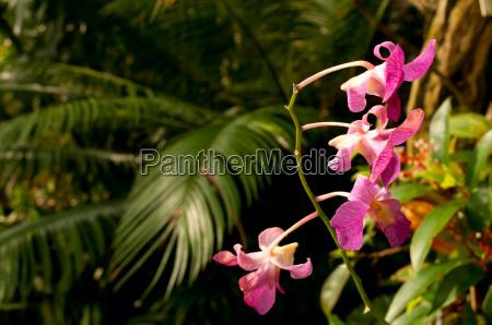 fiore fiori giungla tropicale foresta pluviale