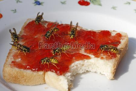 vespe su pane tostato