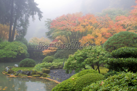 foggy morning at japanese garden by