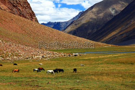 tibet india montagna himalaya
