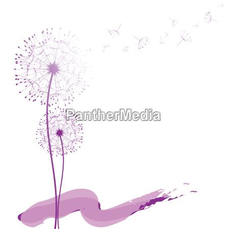 fiore tarassaco astratto astrarre biglietto dauguri