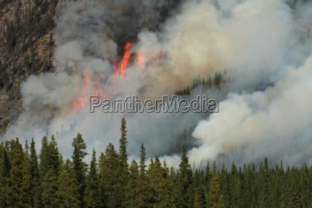fumo albero alberi fuoco incendio fiamma