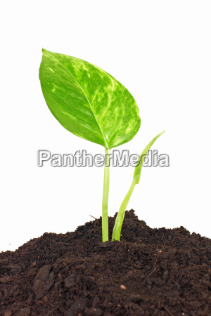 suolo terra terreno botanica ecologia crescita