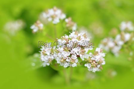 cibo spezia colore primo piano flora