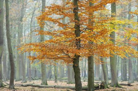 autunno a wisentgegewald springe germania