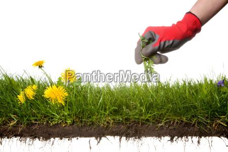 giardino suolo terra terreno sporcizia giardiniere