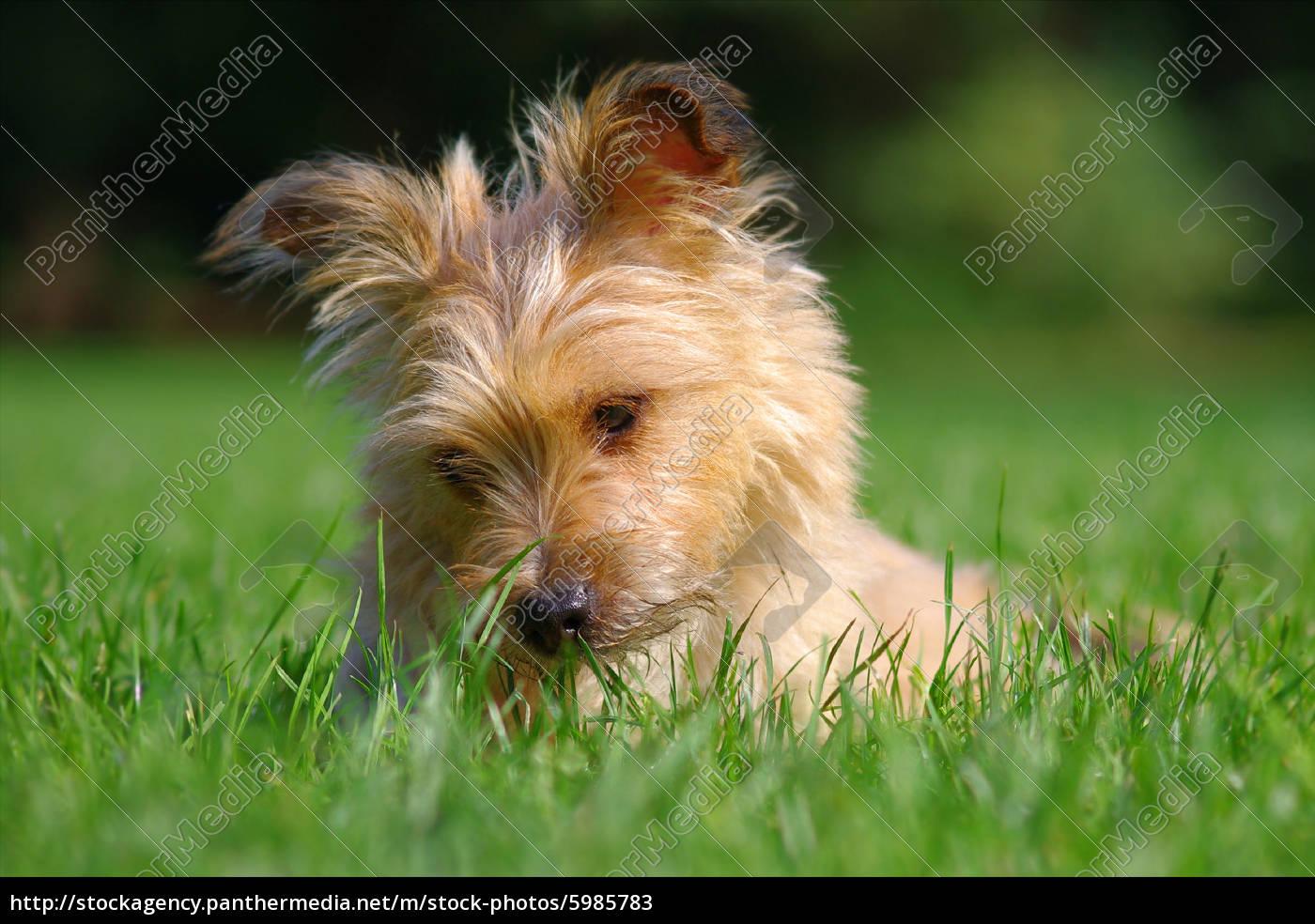 il, mio, cane - 5985783