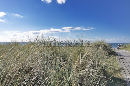 view through the dune grasses on