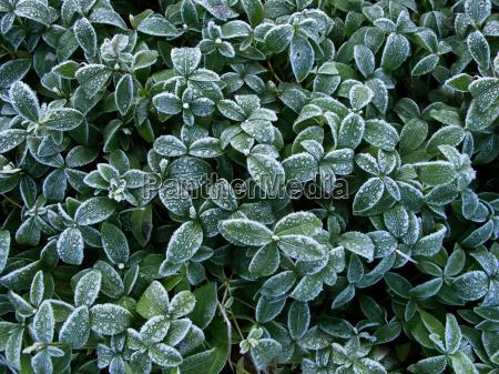 inverno foglie gelo congelato stagione congelamento