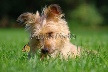 ambiente insetti animali cani farfalla farfalle