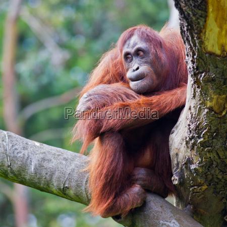 ambiente colore femminile albero animale mammifero