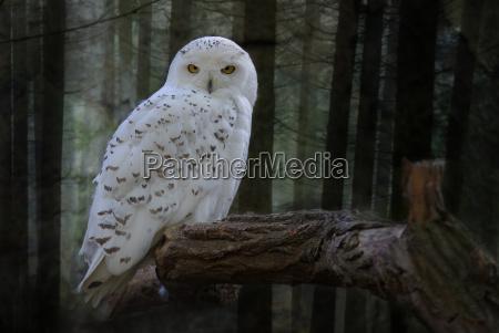 ambiente uccello animali uccelli natura gufo