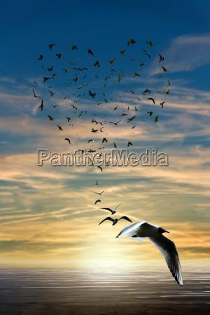 uccello uccelli fantasia amare amore innamorato