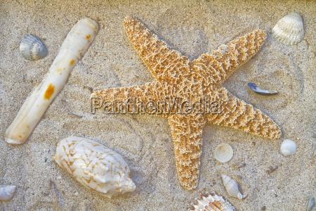 spiaggia stella di mare alluvionale conchiglie