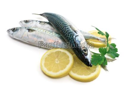 rilasciato pescare appartato tre frutti di