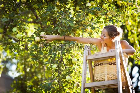 la giovane donna fino raccolta mele