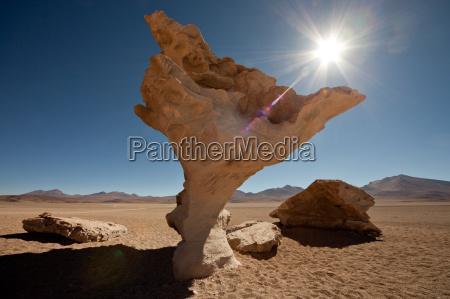 cosiddetto arbol de piedra albero di