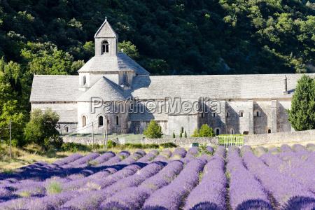 abbazia di senanque con campo di