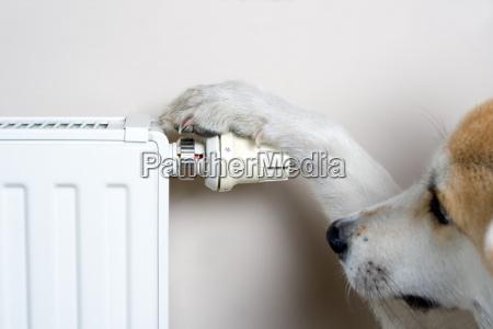 cane regolazione della temperatura di comfort