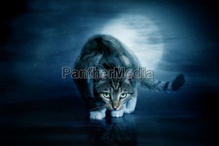 notte luna gatti inseguimento gatto gatta