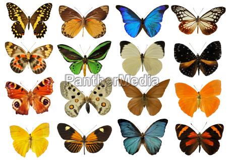 farfalla colorfull