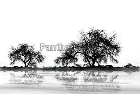 albero alberi palude nero caucasico bianco
