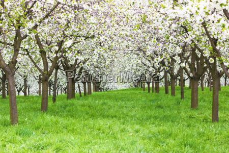 bello bella albero parco giardino fioritura