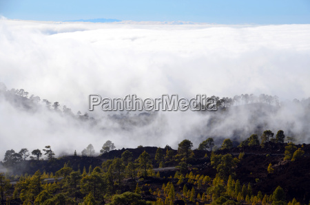 albero alberi nebbia tenerife cielo firmamento