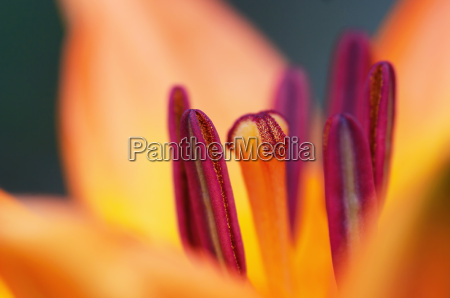 primo piano close up fiore fioritura