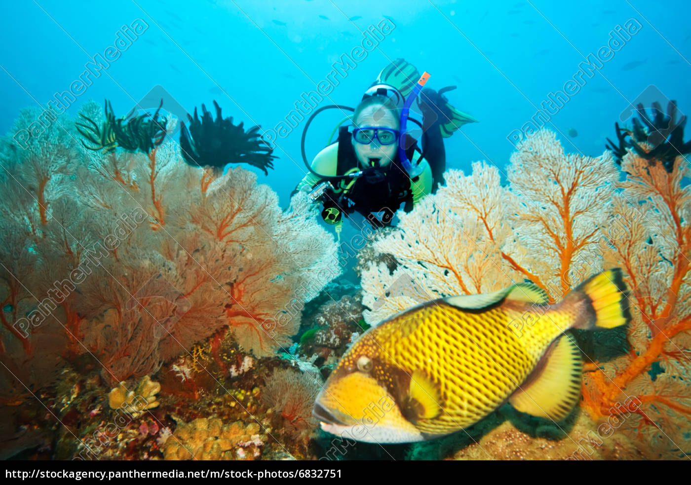 triggerfish, and, diver - 6832751