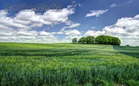 paesaggio agricolo convenzionale