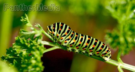giardino insetto farfalla estate mangiare divorare