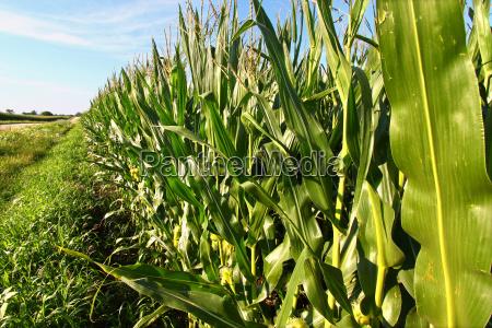 agricoltura campo stati uniti damerica usa
