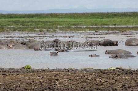 africa gruppo equipe natura safari ippopotamo
