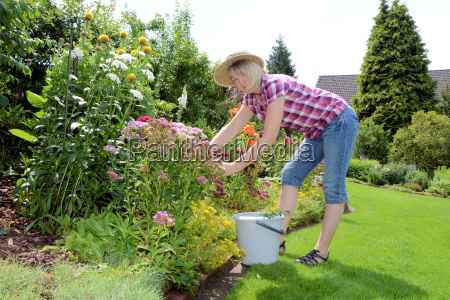 giardinaggio nel mese di luglio