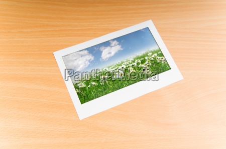 camomiles field on picture frame