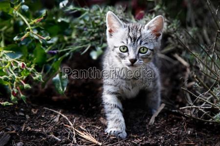 giovane gatto in carte