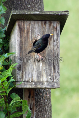 brut nido di nidificazione scatola di
