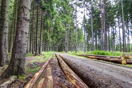 albero alberi resina legname foresta natura