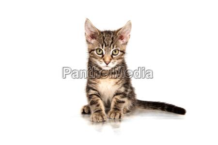 animale animali gatti giovani gatto gatta