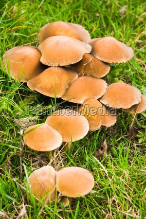 chiudere foglia marrone cappello foreste bagnato