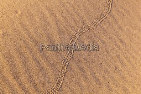 segno di serpente in duna