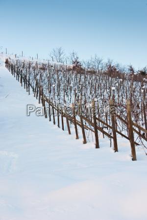 inverno industria agricoltura campo cocaina farmaco