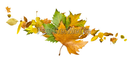 autumn leaves set white isolated