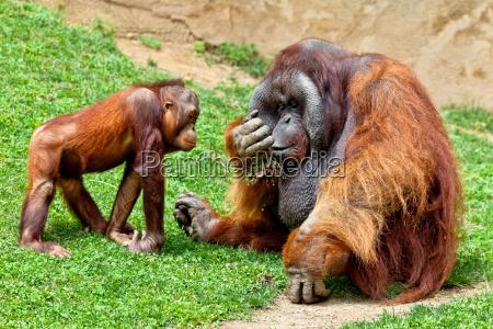 animale mammifero marrone selvaggio forte faccia