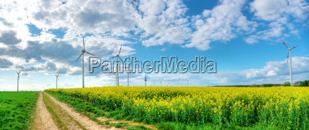 dramatic cloudy sky with rapeseed field